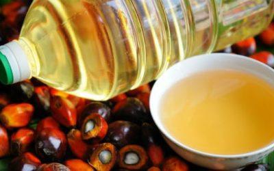 Quais os benefícios do óleo de palma?